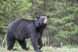 bear valley improvement association