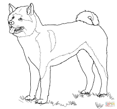 american akita coloring page free printable coloring pages