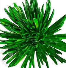 Lime Green Flowers - wholesale green flowers st patrick u0027s day flowers free