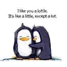 Cute Penguin Meme - i like you a lottle funny quotes pinterest penguins penguin