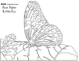 rice paper butterfly coloring page free printable coloring pages