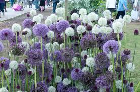 garden flowers ideas designs list idolza