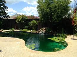 rowlett family converts swimming pool to a natural swimming pond