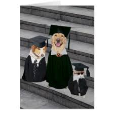 dog graduation cap and gown dog graduation cap and gown best gowns and dresses ideas reviews