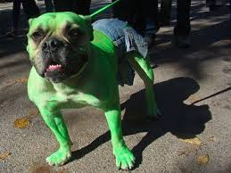 Halloween Animal Costumes by 19 Halloween Costumes That Are Actually Clever Hulk Dog And Animal