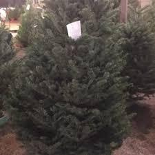 family christmas tree farm 23 photos u0026 36 reviews christmas