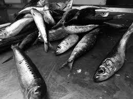 lexus for sale kzn pics sardines a major boost for kzn iol news