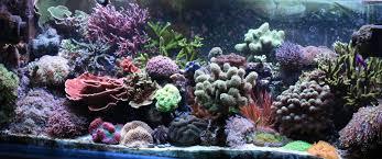 Home Aquarium File Reef Aquarium At Home Jpg Wikimedia Commons