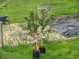 how to build your own backyard fruit tree orchard u2013 brazo u0027s valley