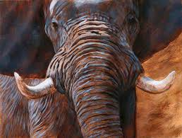 i wanted to give myself an even better map to follow so for this large elephant i took the tonal under painting a stage further than normal and added some