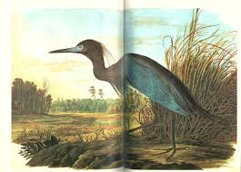 the original water color paintings by john james audubon for the