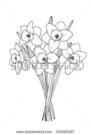 spring daffodil bouquet a4 printable coloring stock vector