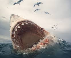 biggest megalodon shark shark news 20 foot great white circles divers off mexico daily star
