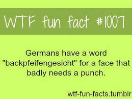 best 25 interesting facts ideas on facts