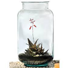 32 best terrarium container images on pinterest terrarium