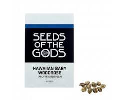 hawaiian baby woodrose hawaiian baby woodrose argyreia nervosa seeds azarius