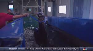 derby horse trained in swimming pool this week because of his