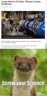 Weasel Meme - weasel memes best collection of funny weasel pictures