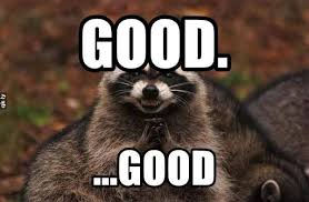 Evil Meme - 18 evil plotting raccoon memes that will make you nervously laugh