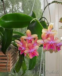 Most Fragrant Plants - 1005 best fragrant plants images on pinterest balcony plants