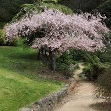 flowering trees nurseries