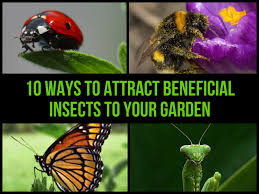 31 natural tricks to repel pesky bugs u0026 insects