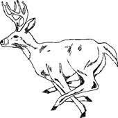 deer pictures printable coloring pages