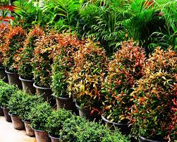 iran supplies 1 of world flower markets financial tribune
