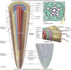 95 best practical images on pinterest biology ferns and botany
