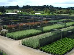 plant list advanced plants melbourne wholesale advanced plant