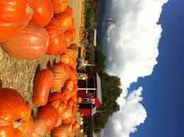 pumpkin patch lane farms