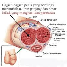 apotek penjual cara memperbesar penis rahasia pria perkasa