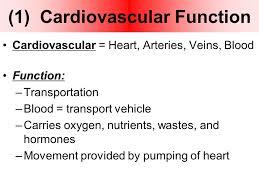 Heart Anatomy Arteries 1 The Heart Heart Anatomy U0026 Basic Function 1 Cardiovascular