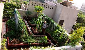 roof garden plants edible landscaping rooftop kitchen garden jardin potager