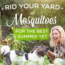 Best Way To Get Rid Of Mosquitoes In Your Backyard Wondercide Blog