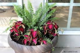 native pot plants shade pot plants 7 nice decorating with plant shade i have