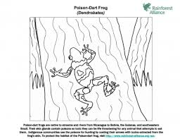 poison dart frog coloring rainforest alliance