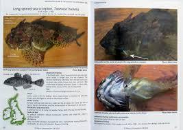 torpedo 2015 marine life news bulletin