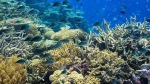 airbnb contest offers winner chance to stay on great barrier reef