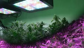 is full spectrum lighting safe led grow light basics grow lights for indoor plants led plant lights