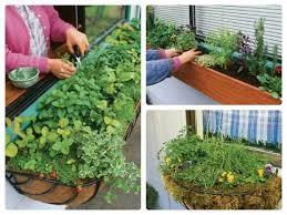 Indoor Herb Pots Window Box - 7 best indoor herb garden images on pinterest fresh herbs herbs