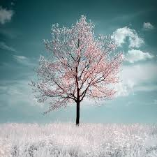 210 best my of trees images on nature landscapes