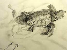 baby sea turtle crawling to ocean original framed drawing
