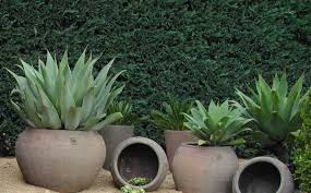 large pots for garden large pots for plants fall home decor