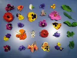 edible flowers edible flowers part one eat the weeds and other things