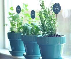 plant unique planters gratifying unique tea cup planters