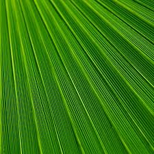 leaf green apk free androidpapers co android wallpaper vn29 leaf green surface