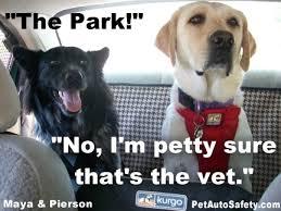 Dog At Vet Meme - almost wordless wednesday memes american dog blog