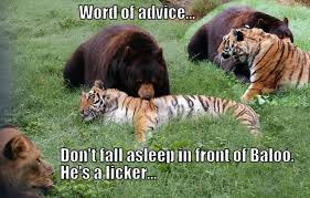 Animal Advice Meme - advice meme funny pictures quotes memes funny images funny