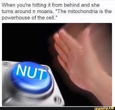 Em Meme - where nut and succ came from and what they mean